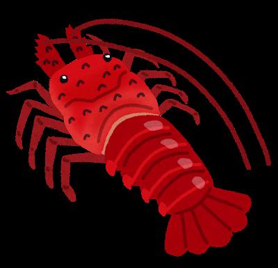 赤い立派な海老